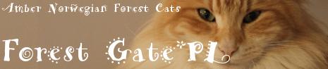 ForestGate.PL – Hodowla Kotów Norweskich Leśnych