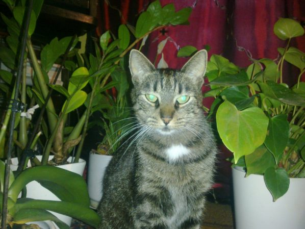 2016-08-12: Ktokolwiek widział ktokolwiek wie… zaginął kot Emil!
