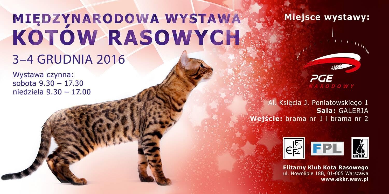 2016-12-03 & 04: Międzynarodowa Wystawa Kotów Rasowych