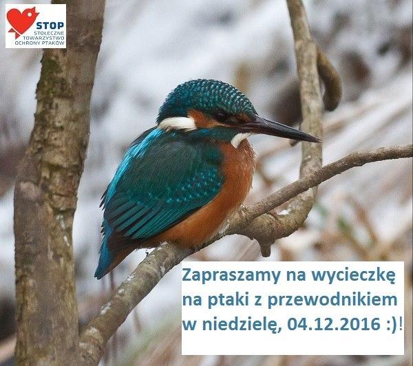 """2016-12-04: wycieczka """"na ptaki"""" praskim brzegiem Wisły"""