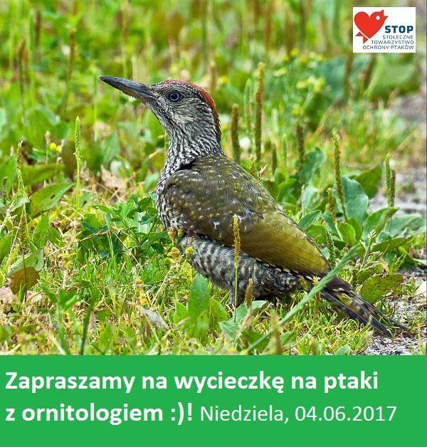 2017-06-04: wycieczka ornitologiczna po terenie ogrodów działkowych
