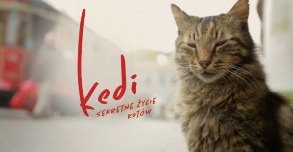 """2017-10-07:  KINO KĘPA: """"Kedi – sekretne życie kotów"""""""