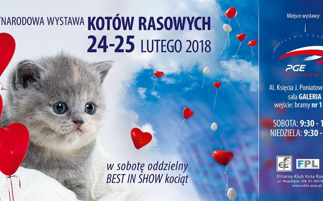 2018-02-24 & 25: Międzynarodowa Wystawa Kotów Rasowych
